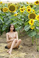 Vanessa-A-The-Tallest-Sunflower-x111-4000px--36tsm2p50q.jpg